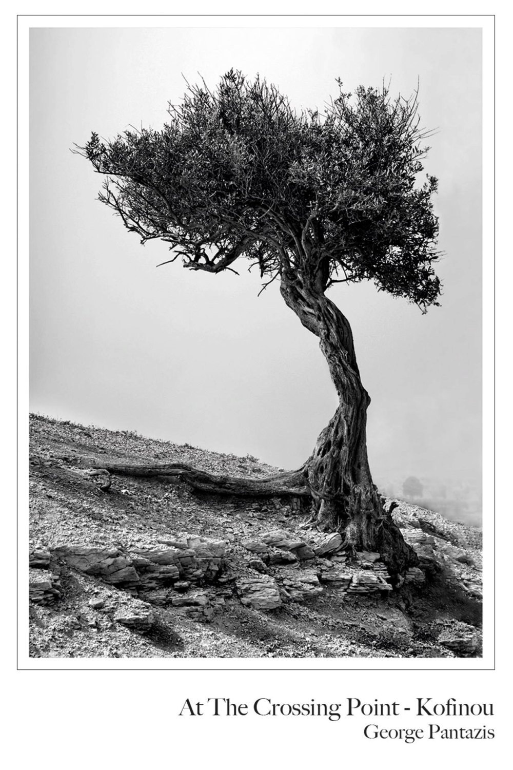 At The Crossing Point - Skarinou by George Pantazis (olive tree, nature, landscape, fine art photography, black and white, monochrome, Cyprus, Mediterranean)